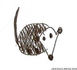 A possum